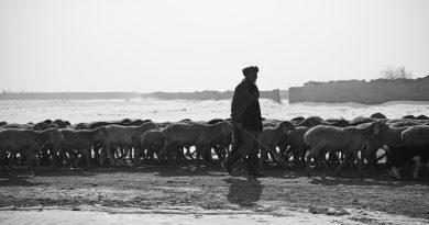 La ricerca e l'attesa del pastore